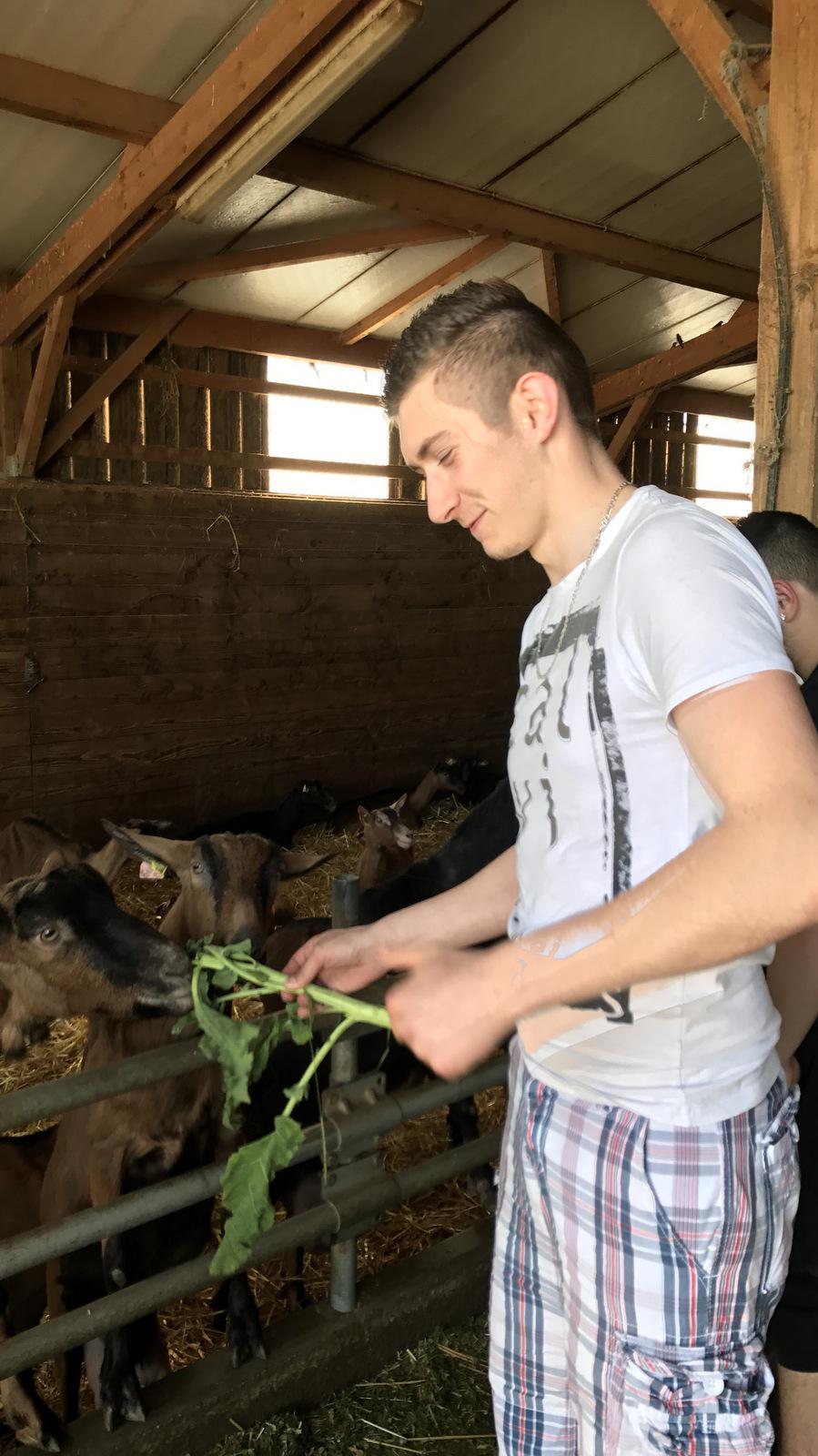Alexis Technicien Agricole amoureux des chèvres