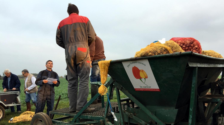 Ligue contre le cancer Lion'Club et CFA MFR PuySec contre le cancer. Plantation de Tulipes