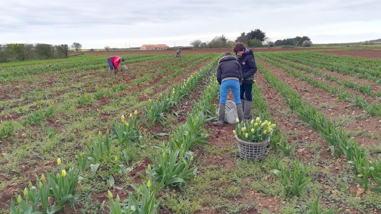 Vaincre le cancer grâce un simple bouquet de tulipes avec le Lions'Club