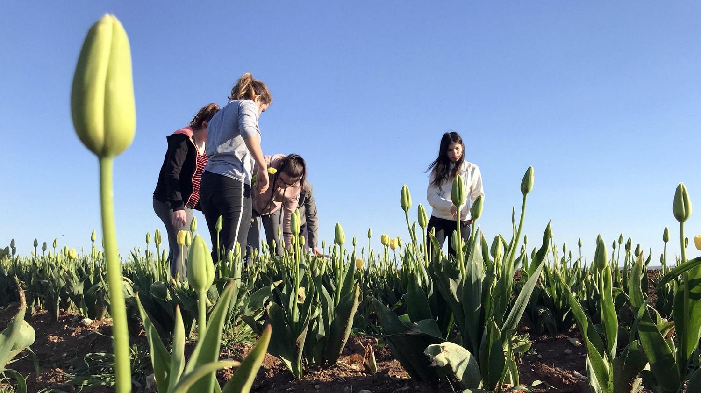 Vie résidentielle au CFA MFR Puy-Sec Cueillette tulipes contre le cancer