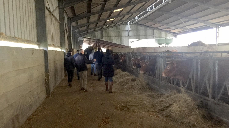 bovin biologique GAEC «La Grange»