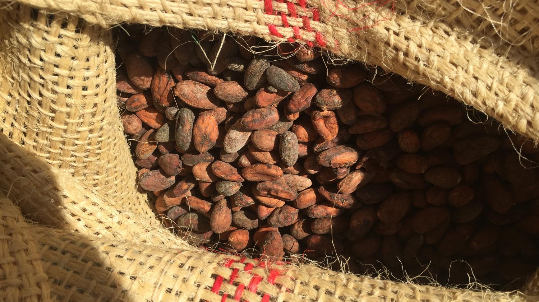 Fèves cacao Chocolat Legast Belgique
