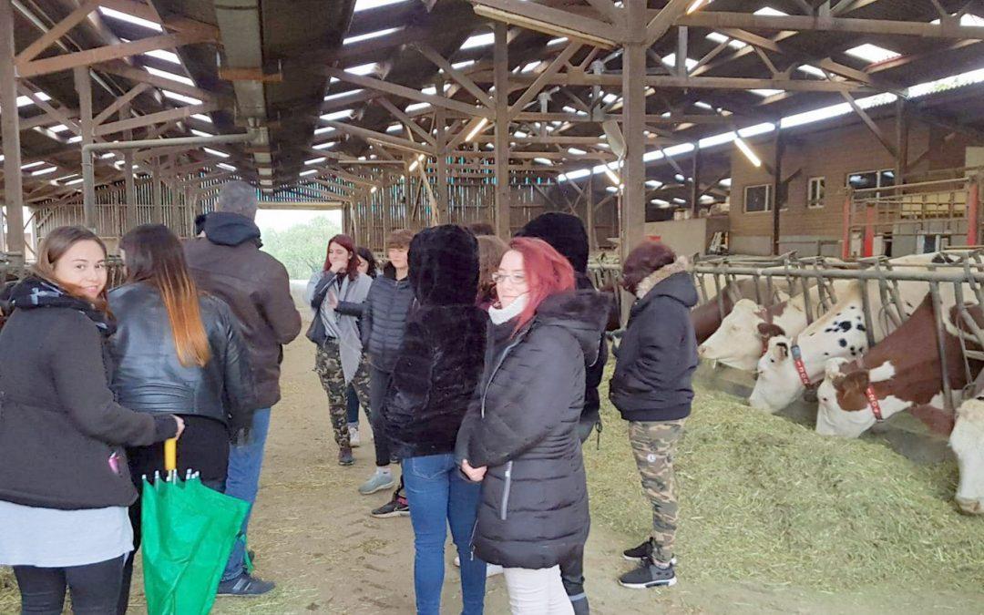 visite élevage de vaches laitières