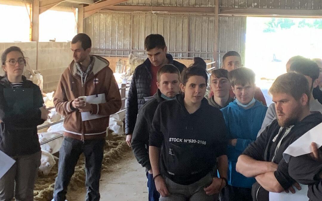 Après-midi technique pour les TA1 : la ration mélangée en chèvres